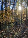 Autumn Gold photos stock