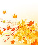 Autumn in gold Stock Photography