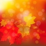 Autumn Gold Fotos de archivo