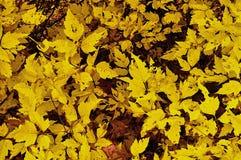 Autumn Gold Imagenes de archivo