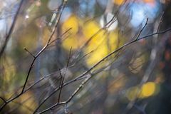 Autumn gold colored leaves with blur background and tree branches. With sun rays in background stock photography