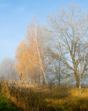 Autumn gold in fog Stock Photography