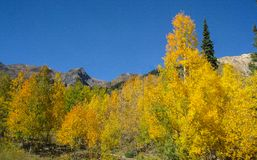 Autumn Gold i Sanen Juan Mountains arkivbilder
