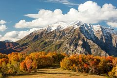 Free Autumn Gold In The Southern Wasatch Mountains. Stock Images - 101768084