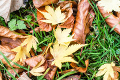 Autumn Gold Leaves On The Ground. Shallow Depth of Field Leaves on the grass Royalty Free Stock Photography