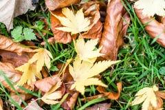 Autumn Gold Leaves On The jordning royaltyfri fotografi