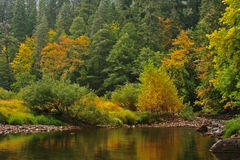 Early autumn forest and stream. Early fall or autumn colors showing in a forest by a quiet stream Royalty Free Stock Photography