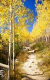 Autumn, golden aspens guarding the trail Stock Images