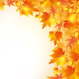 Autumn golden background with leaf fall. Autumn background with red, yellow and orange leaves. Nature golden wallpaper with leaf fall. Place for text. Vector Royalty Free Stock Image