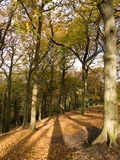 Autumn Golden Brown Trees Stock Images