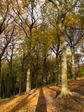 Autumn Golden Brown Trees Stock Photos