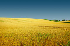 Autumn golden field landscape, gorgeous nature Royalty Free Stock Photos