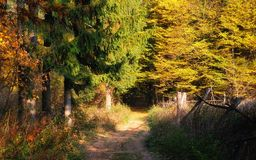 Autumn golden forest path stock images