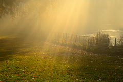 Autumn golden  Light  and  golden colour In haampstead london Stock Photography