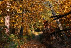 Autumn golden rusty forest path Royalty Free Stock Image