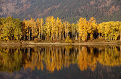 Autumn, Golden Trees Royalty Free Stock Image
