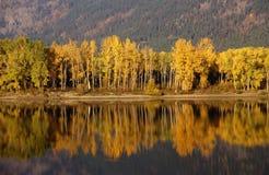 Autumn, golden trees Royalty Free Stock Image