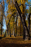 Autumn With Golden Trees, Clitunno Springs Royalty Free Stock Image