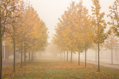 Autumn golden trees in fog Royalty Free Stock Photos