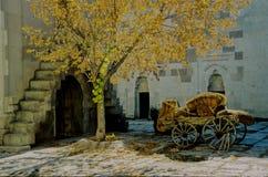 autumn golden turkey Στοκ Εικόνες