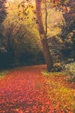Autumn in Goldsworth Park in Woking Royalty Free Stock Image