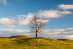 Autumn golf course. On the empty golf course in autumn Stock Photography