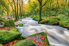 Autumn at Golitha Falls in Cornwall Stock Photo