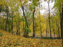 Autumn forest. Gomel. Autumn in the Gomel Park. Belarus Royalty Free Stock Image