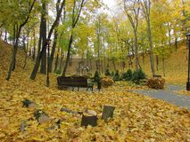 Autumn forest. Gomel. Autumn in the Gomel Park. Belarus Royalty Free Stock Photos
