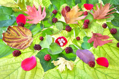 Autumn goodbye. Beauty and colors of the leaves of autumn Royalty Free Stock Image