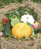 Autumn goodies Stock Photos