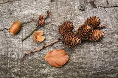Autumn goodness royalty free stock photography