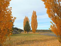 Autumn At the Gorge. Fall scene at the Crooked River Gorge - Peter Skene Ogden State Park near Terrebonne, OR Royalty Free Stock Photos