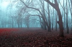 Autumn gothic landscape - foggy forest with bare trees and fallen red autumn leaves. Autumn gothic landscape - foggy mysterious forest with bare trees and fallen stock photography