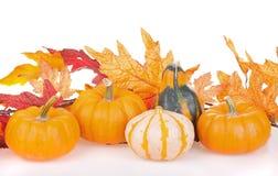 Autumn Gourd Arrangement Stock Images