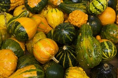 Autumn gourd background Royalty Free Stock Photography