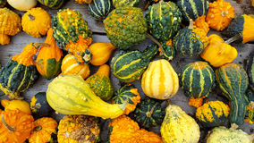 Autumn gourd collection Stock Images