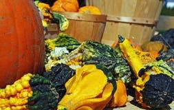 Autumn Gourds. A mixture of autumn gourds Stock Photography