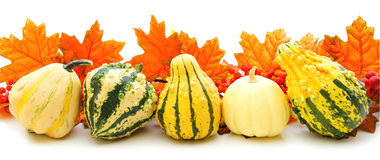 Autumn gourds Royalty Free Stock Photo