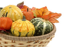 Autumn Gourds. Colorful autumn gourds with fall foliage in a basket stock image