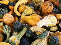 Autumn Gourds royaltyfria bilder