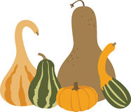 Autumn Gourds Photographie stock libre de droits