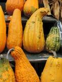 Autumn Gourds Fotos de archivo