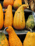 Autumn Gourds. Colorful gourds displayed on a rustic wooden staircase during Autumn stock photos