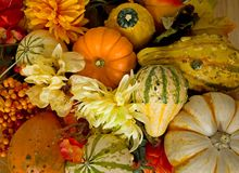 Autumn Gourds and Flowers Stock Photos