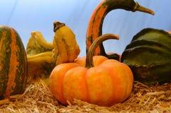 Autumn Gourds Harvest imagem de stock