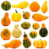 Autumn gourds isolated Stock Photos