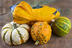 Autumn gourds and pumpkins Stock Image