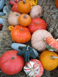 Autumn gourds and pumpkins. Fall arrangement of gourds and pumpkins on bales of straw Royalty Free Stock Photography