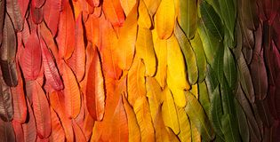 Autumn gradient. Composition of the fallen leaves of different trees packed in rows by color stock photo